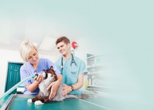 home_vet_offer_bg1